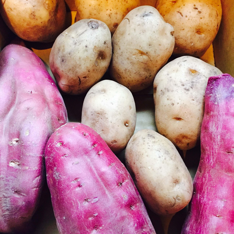 お芋祭り開催!のブログ画像