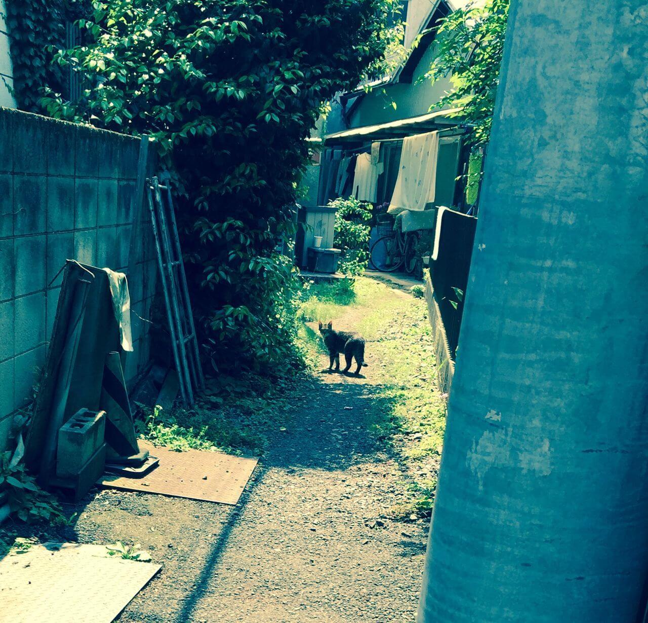 ネコさんと遭遇の日記イメージ写真
