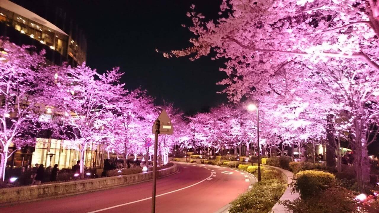 六本木の桜!のブログ画像