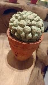 いまさらながらサボテンと多肉植物にハマるワタシのブログ画像