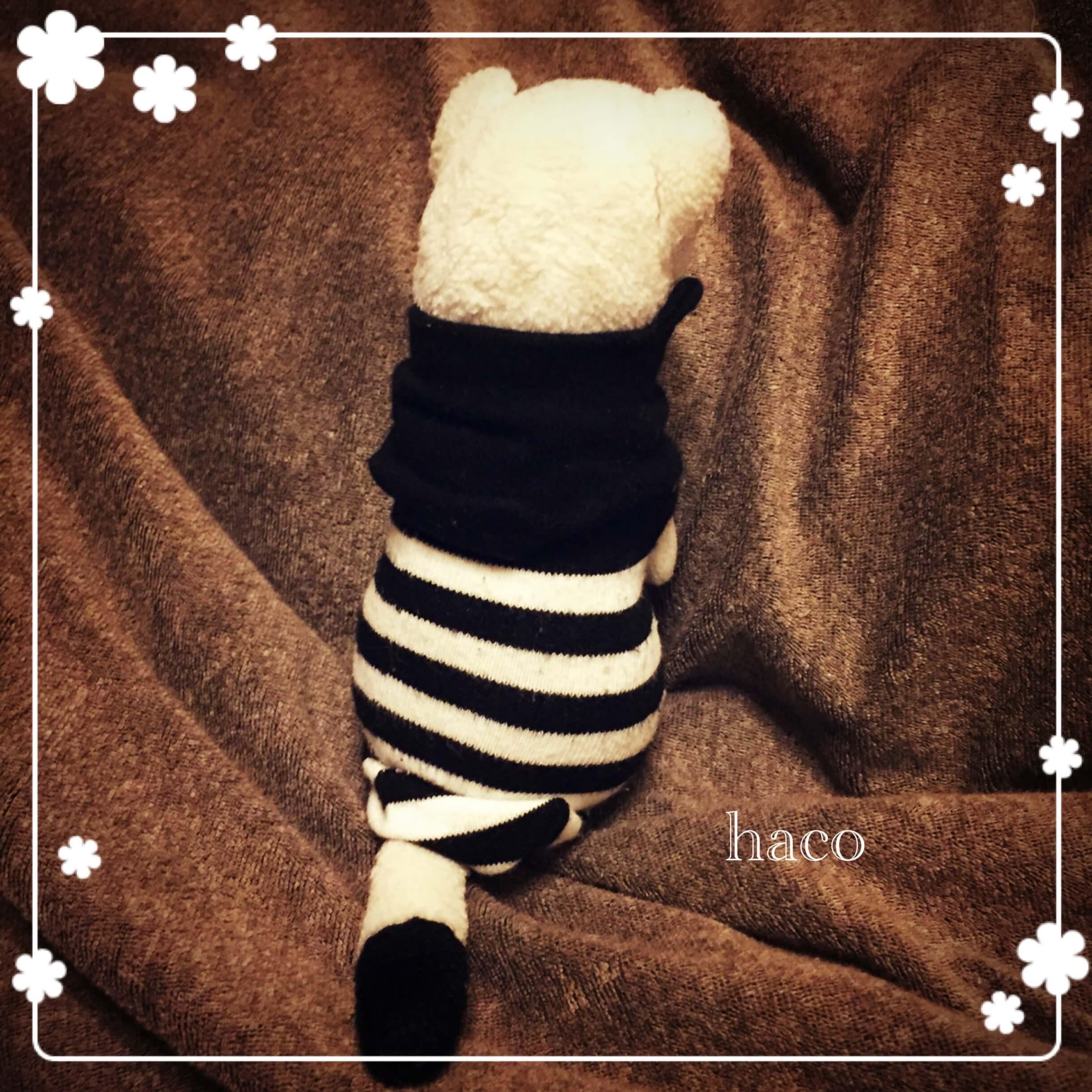 hacoのプロフィール画像