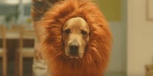 赤ちゃんとライオン犬で話題のAmazonプライムのCMに感動のサムネイル画像